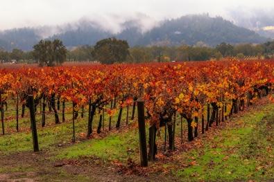 Red Red vine!