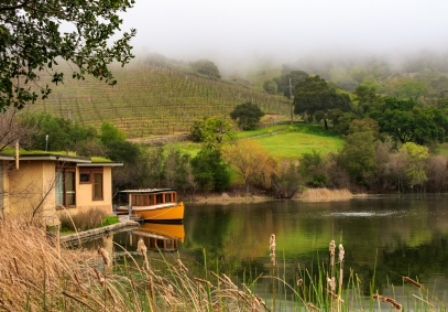 Early Morning in the Vineyards